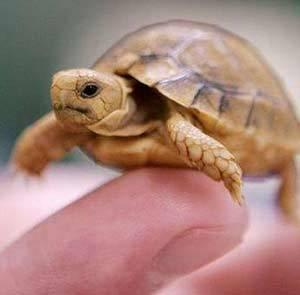 tortoise for sale near me
