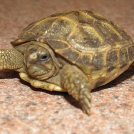 Zoomed Forest Floor 8 Quarts Tortoise Substrate Habitat