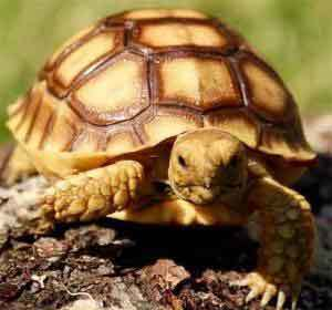 baby tortoises for sale