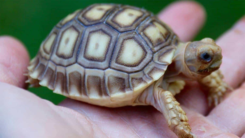 Star Tortoise Food List
