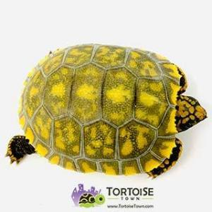 tortoise farm