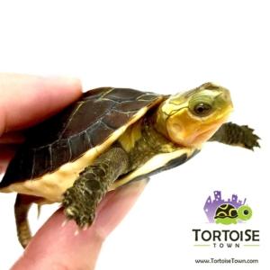turtle store