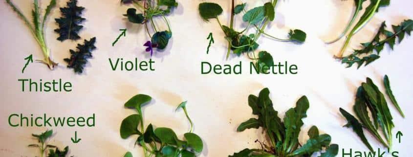 tortoise safe plants