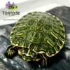 yellow belly slider turtle
