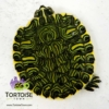 yellow belly turtle for sale