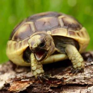 baby tortoise care sheets