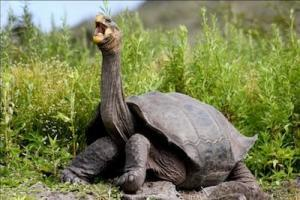 galapagos tortoises for sale