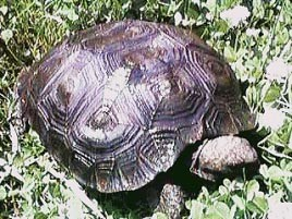 how to care for a tortoise at home