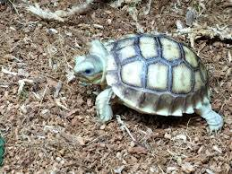 baby tortoise for sale near me