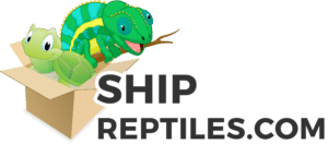 reptile shipping supply