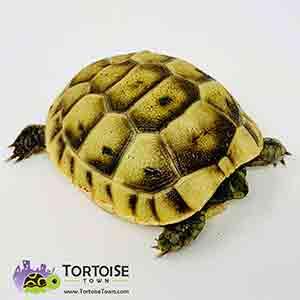 tortoise farms