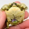 Moroccan Greek tortoises for sale