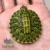 Ornate Slider Turtle for sale